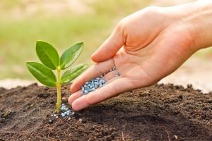 sewage sludge fertilizer